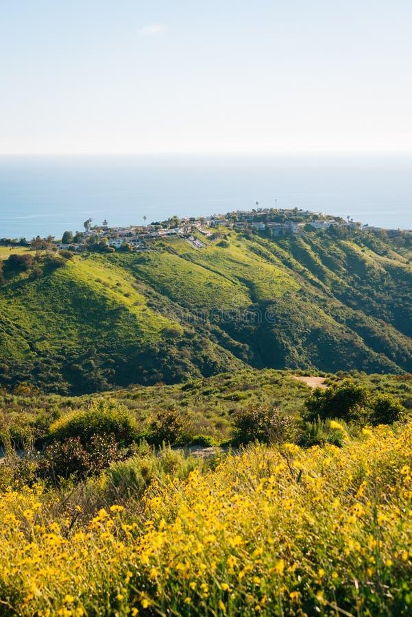 Gelbe Blumen mit Häusern, grünen Hügeln und dem Pazifischen Ozean von der Weltspitze, im Laguna Beach, Kalifornien stockbilder