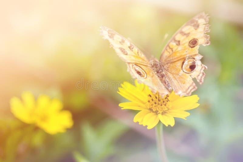 Gelbe Blumen mit Schmetterling auf Garten, Weichzeichnungsprozeß lizenzfreie stockfotografie