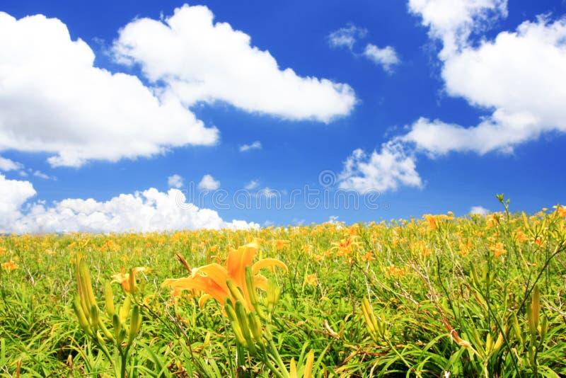 Gelbe Blumen mit Wolke lizenzfreies stockbild