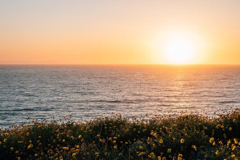Gelbe Blumen und Ansicht des Pazifischen Ozeans bei Sonnenuntergang, bei Dana Point Headlands Conservation Area, in Dana Point, C lizenzfreie stockfotos