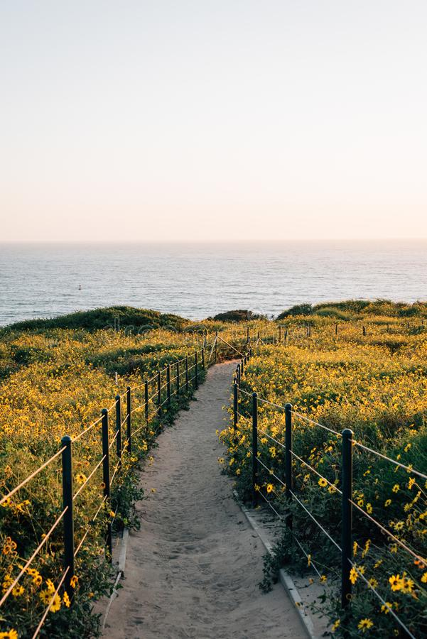 Gelbe Blumen und Spur bei Dana Point Headlands Conservation Area, in Dana Point, County, Kalifornien lizenzfreie stockfotos