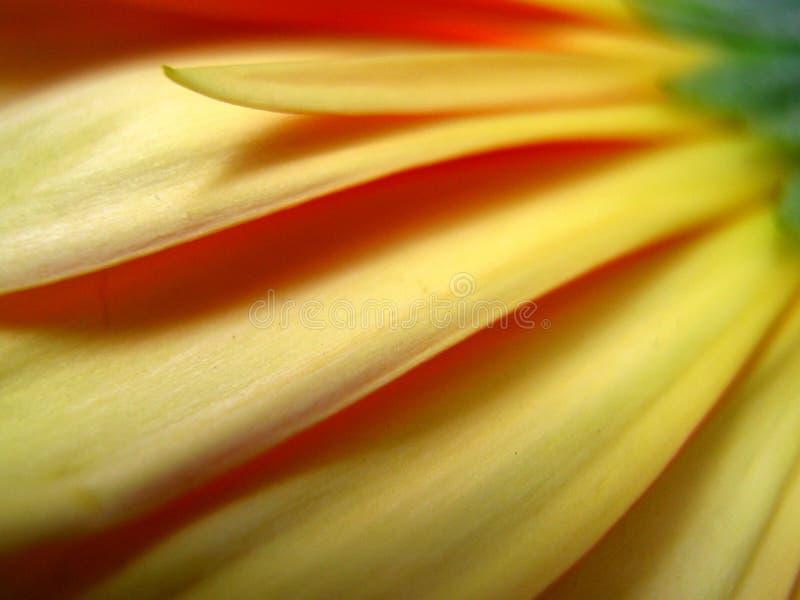 Gelbe Blumenblätter lizenzfreie stockbilder