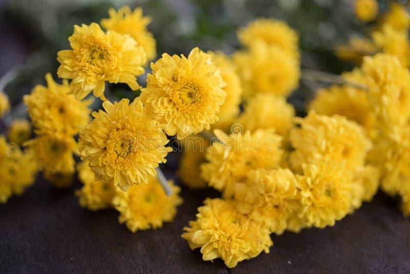 Gelbe Chrysanthemenblume auf hölzernem Hintergrund, Retro- Weinlese lizenzfreies stockfoto