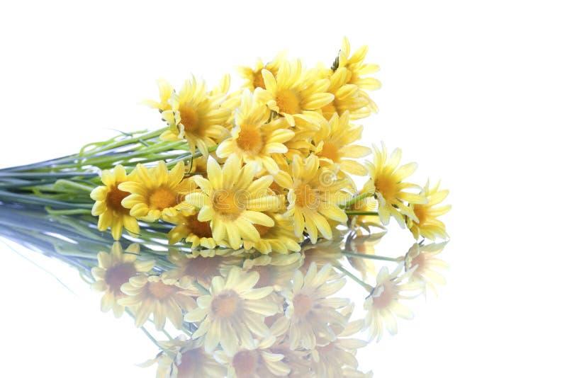 Gelbe daisys getrennt auf weißem Hintergrund stockfotos