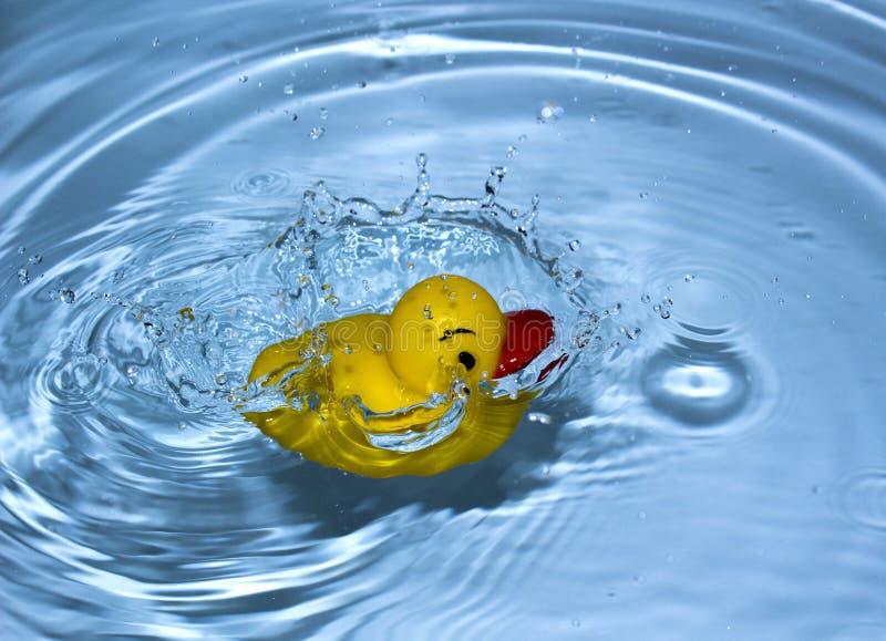 Gelbe Ente stockfoto