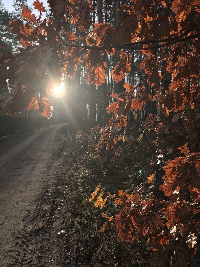 Gelbe Fallblätter hängen an einem Baum in der Frühherbstsonne stockfoto