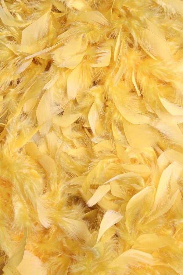 Gelbe Federn   stockfotografie