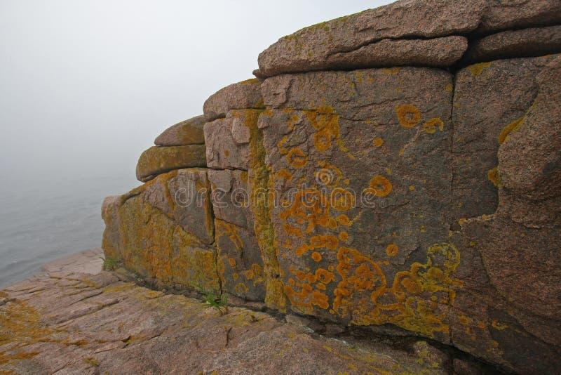 Gelbe Flechten auf der Granitküste des Acadia-Nationalparks, Maine lizenzfreie stockfotografie