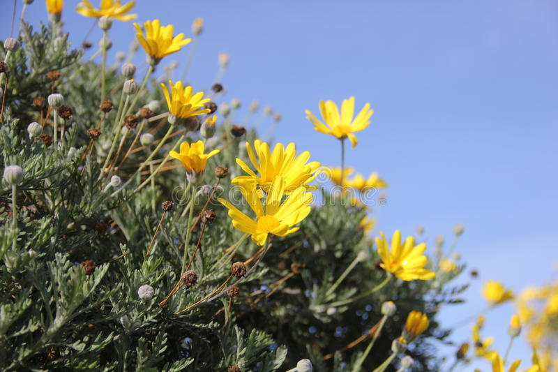 Gelbe Frühlingsblumen stockbild