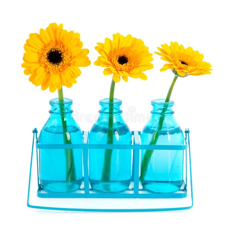 Gelbe Gänseblümchen lizenzfreie stockfotos