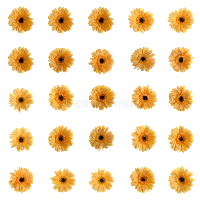 Gelbe Gerberablumen stockfoto