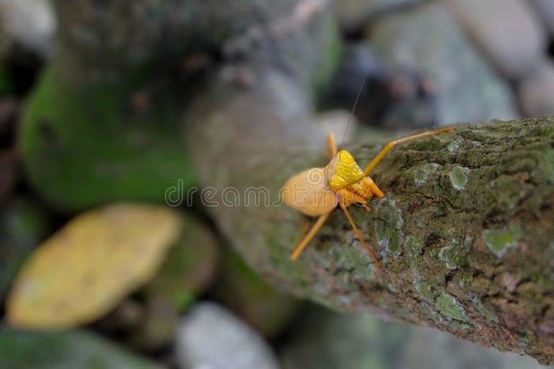 Gelbe Gottesanbeterin auf dem Baum lizenzfreie stockfotos