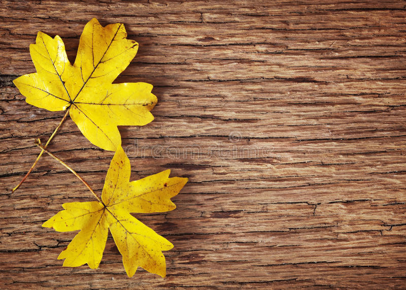 Gelbe Herbstblätter lizenzfreies stockfoto