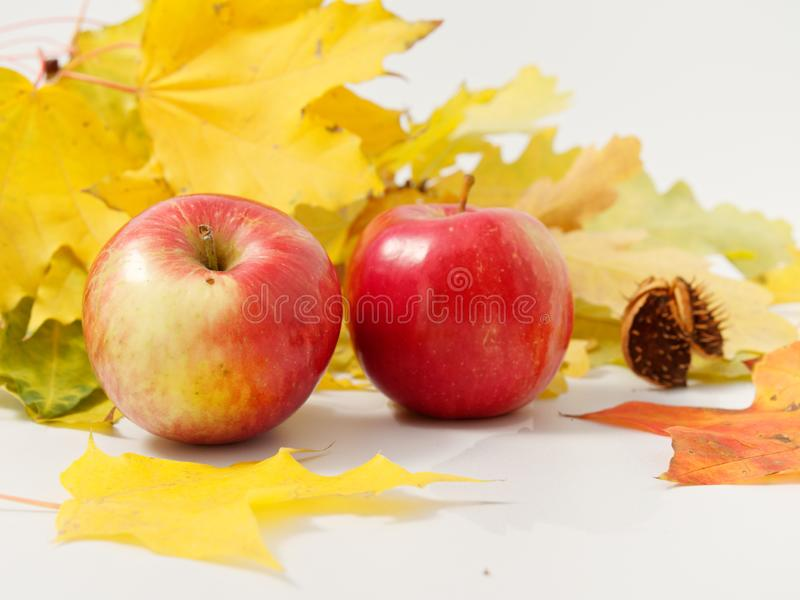 Gelbe Herbstblätter mit roten Äpfeln auf weißem Grund stockfotos