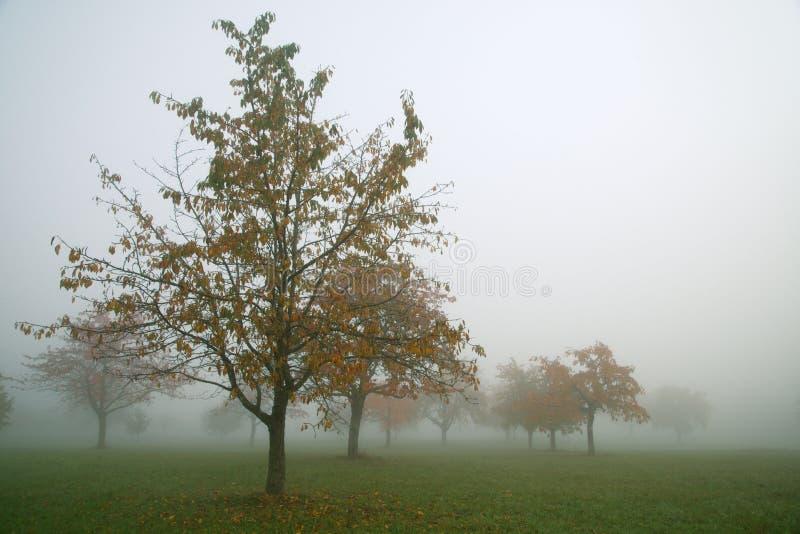 Gelbe Herbstlandschaft im Nebel lizenzfreies stockbild