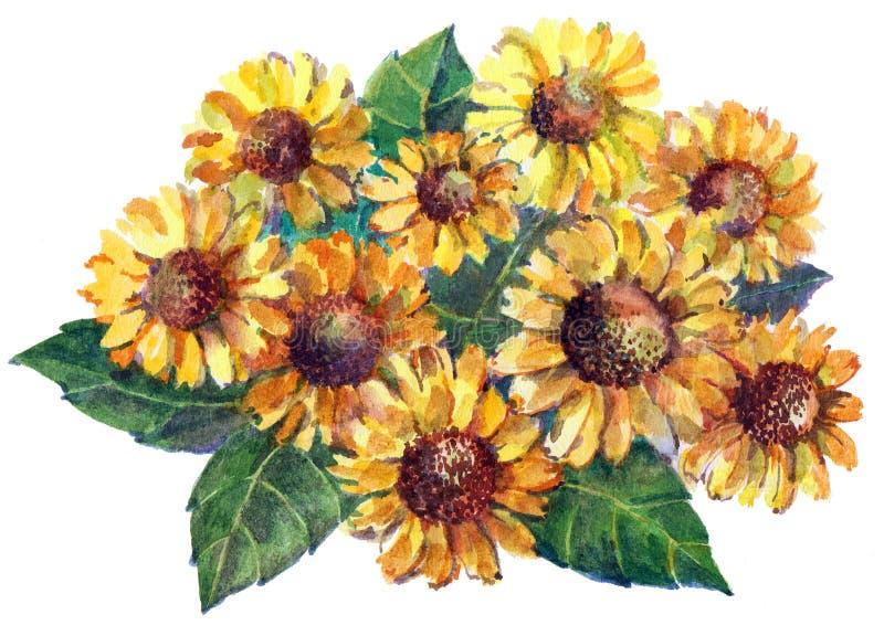 Gelbe Kamillen-Blumenstrauß des Aquarells Illustration für Karte vektor abbildung
