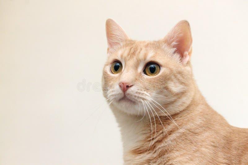 Gelbe Katze stockfotografie