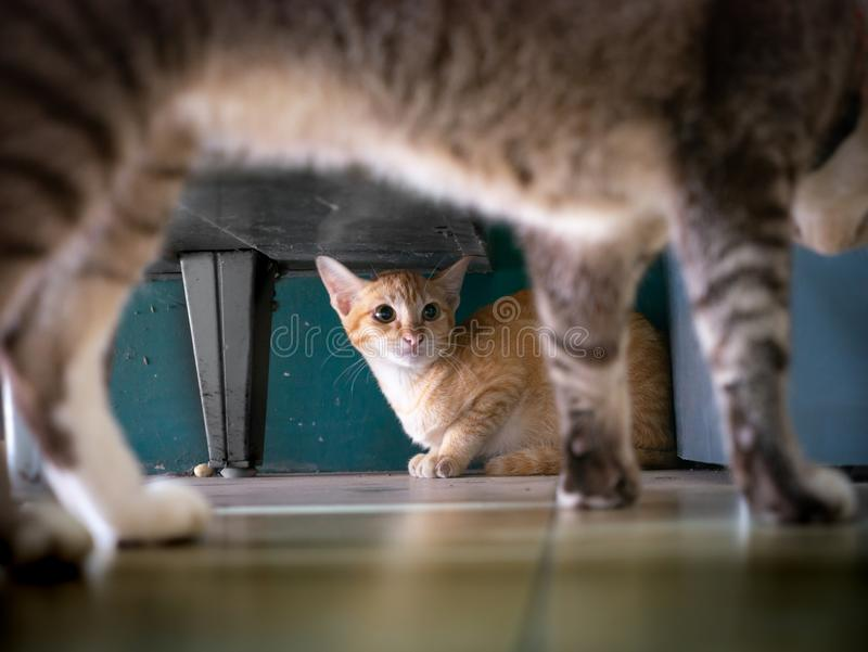 Gelbe Kitten Lost war Gray Cat Threatened lizenzfreie stockbilder