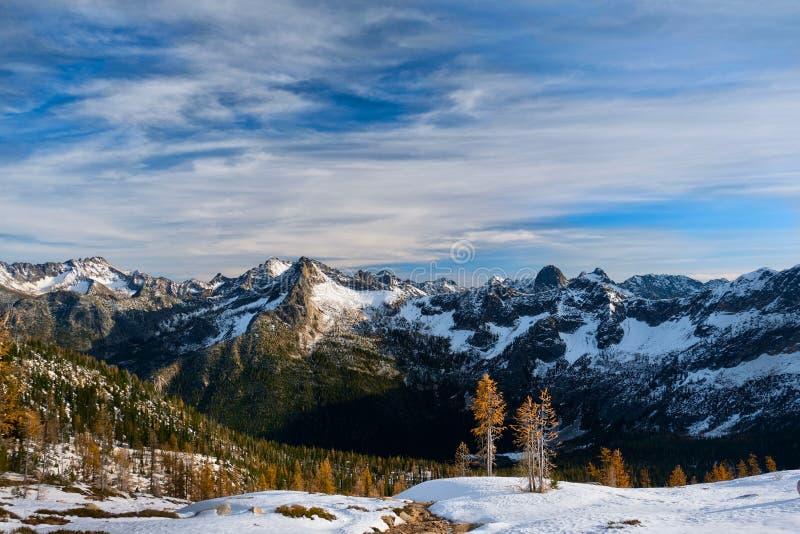 Gelbe Lärchenbäume in schneebedeckten Bergen lizenzfreie stockbilder
