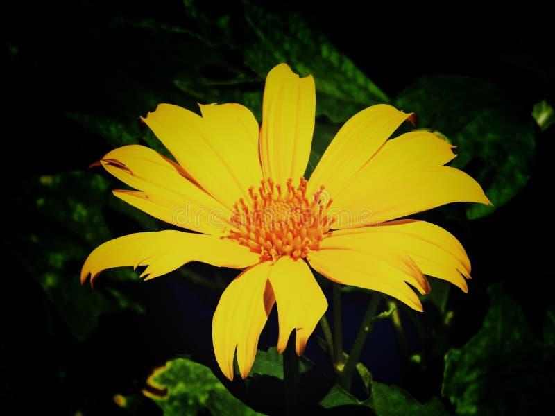 Gelbe Liebe stockfoto