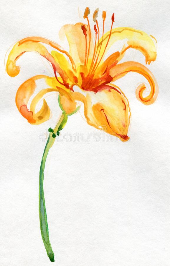 Gelbe Lilienblume, Aquarellillustration lizenzfreie abbildung