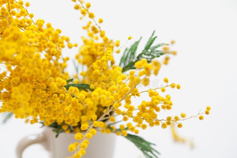 Gelbe Mimosenniederlassung in der Schale auf weißem Hintergrund lizenzfreies stockfoto