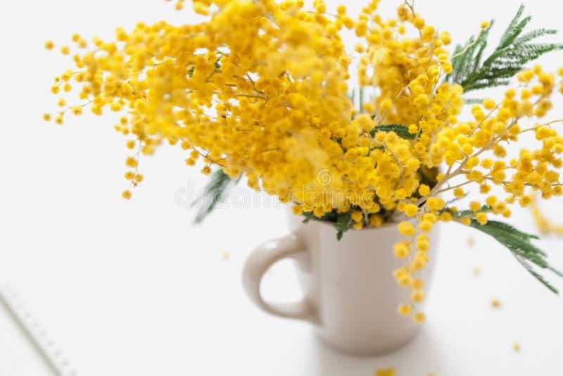 Gelbe Mimosenniederlassung in der Schale auf weißem Hintergrund lizenzfreie stockfotos