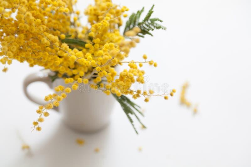 Gelbe Mimosenniederlassung in der Schale auf weißem Hintergrund lizenzfreie stockbilder