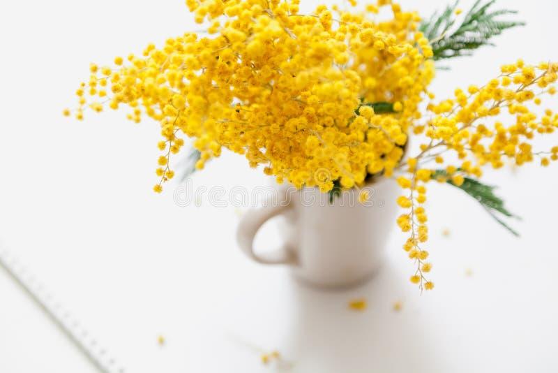Gelbe Mimosenniederlassung in der Schale auf weißem Hintergrund stockbild