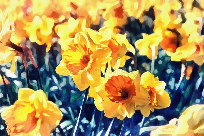 Gelbe Narzissen in den Gärten von Holland Retro- gefiltert stock abbildung