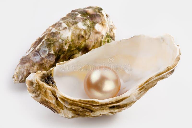 Gelbe Perle stockbild