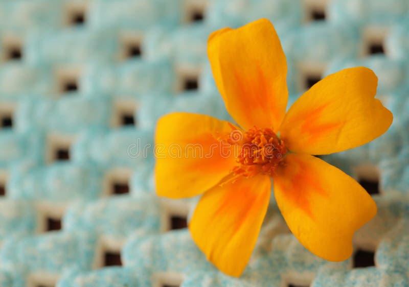 Gelbe Potentillablume stockfoto