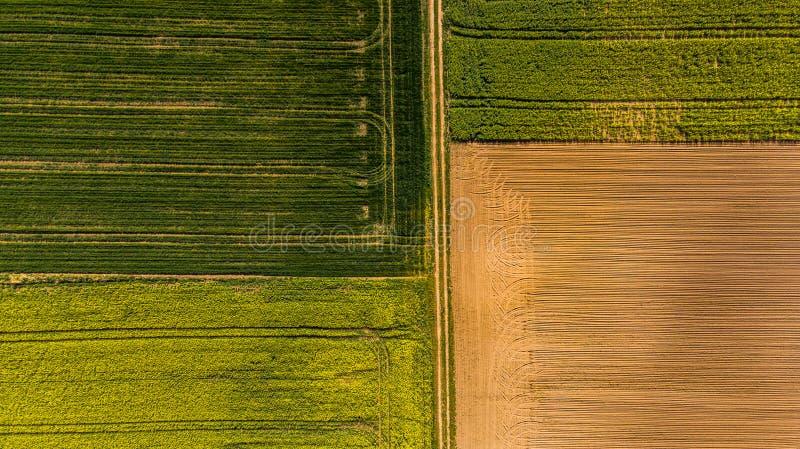 Gelbe Rapsfelder und Boden, Luftbrummenansicht pfl?gen stockfoto