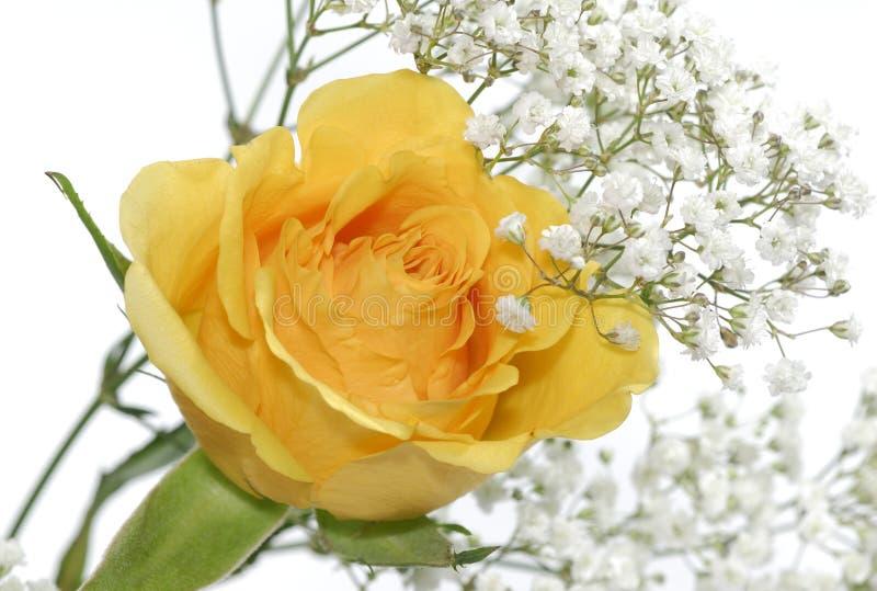 Gelbe Rose stockbild