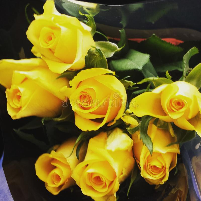 Gelbe Rosen stockfoto