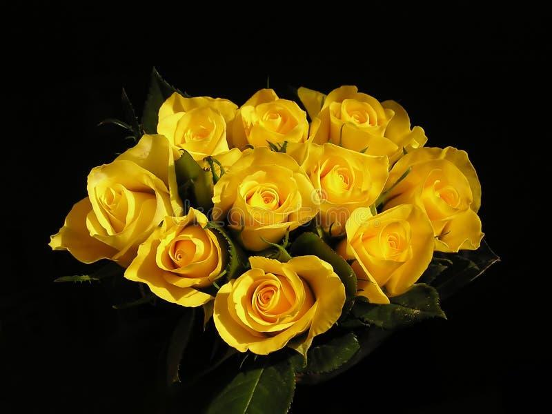 Gelbe Rosen stockbild