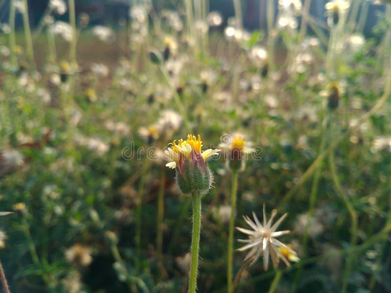 Gelbe Sommerblume stockfoto