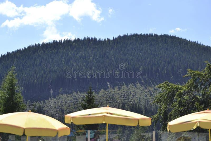 Gelbe Sonnenschirme in Schneeberg-Berg - Niederösterreich lizenzfreies stockfoto