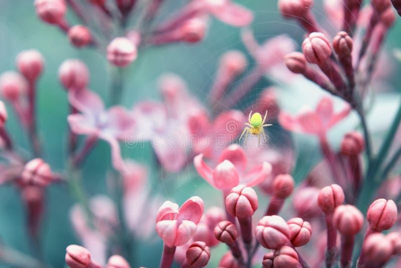 Gelbe Spinne in der blühenden lila Anlage lizenzfreies stockbild