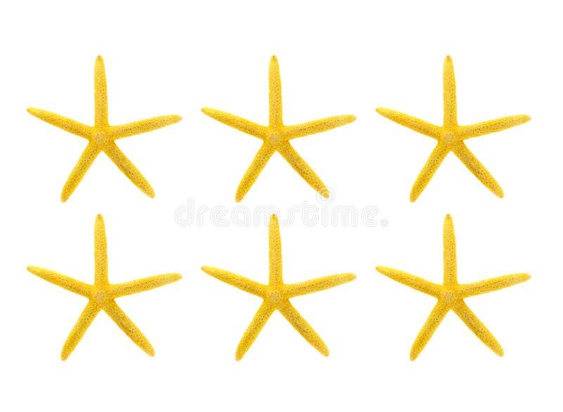 Gelbe Starfish gegen weißen Hintergrund stockbilder