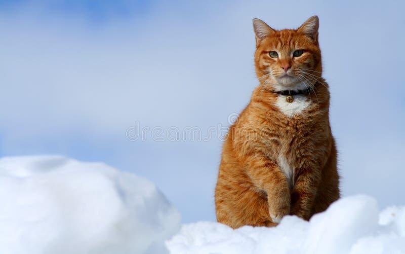 Gelbe Tabby-Katze, die 14 schaut stockfoto