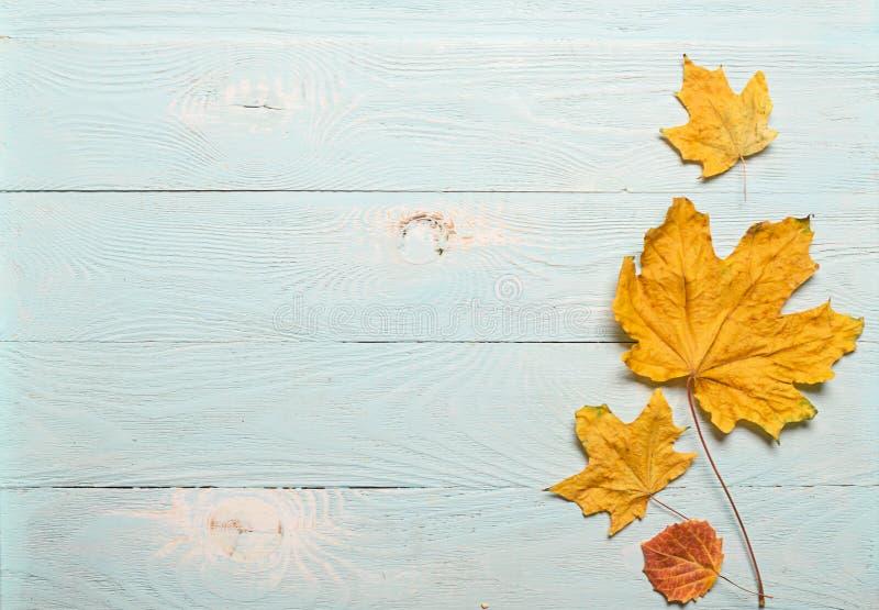 Gelbe trockene Ahornblätter des Herbstes auf einem blauen hölzernen Hintergrund Flacher Plan Ansicht von oben Kopieren Sie Platz  lizenzfreies stockbild
