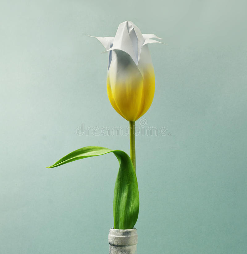 Gelbe Tulpe stockfotos
