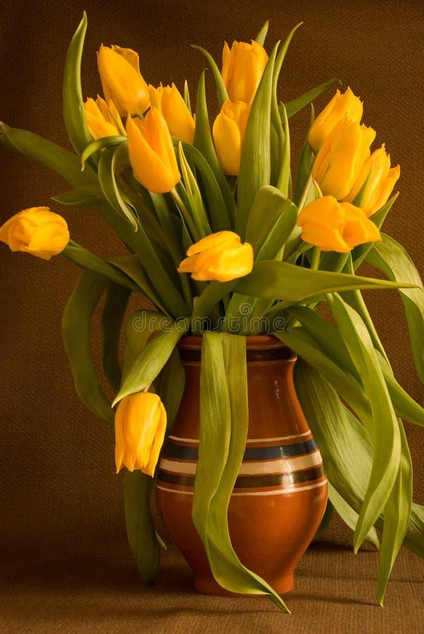Gelbe Tulpen stockbild