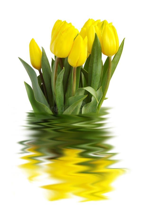 Gelbe Tulpen lizenzfreies stockfoto