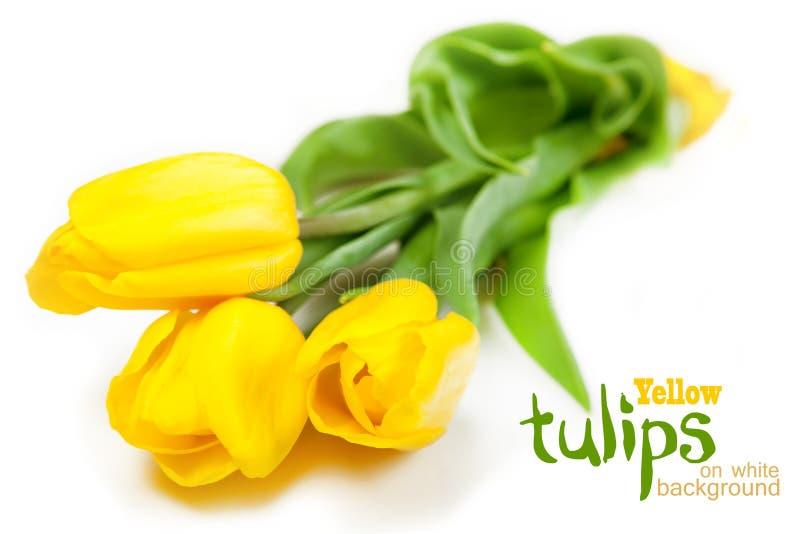 Gelbe Tulpen auf weißem Hintergrund lizenzfreie stockfotografie