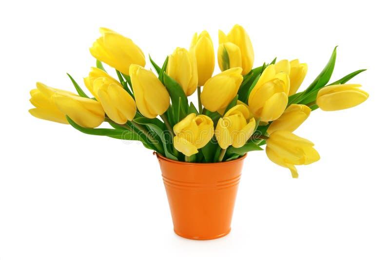 Gelbe Tulpen in der Wanne stockbild