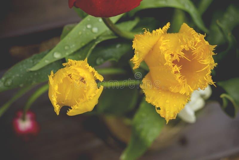 gelbe Tulpen in einem Blumenstrauß lizenzfreies stockbild