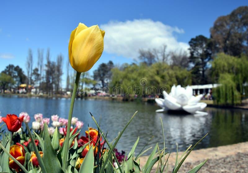 Gelbe Tulpenblume gegen blauen Himmel stockfotos