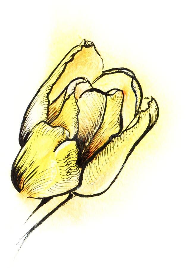 Gelbe Tusche der Tulpe Farbhandund Aquarell sket vektor abbildung